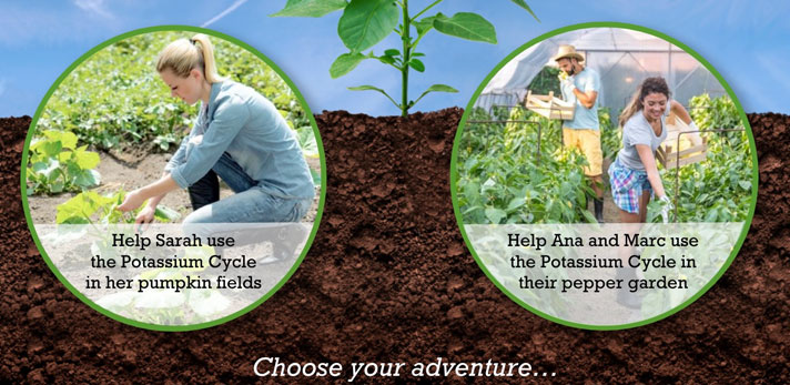 Choose your own Nitrogen Cycle adventure